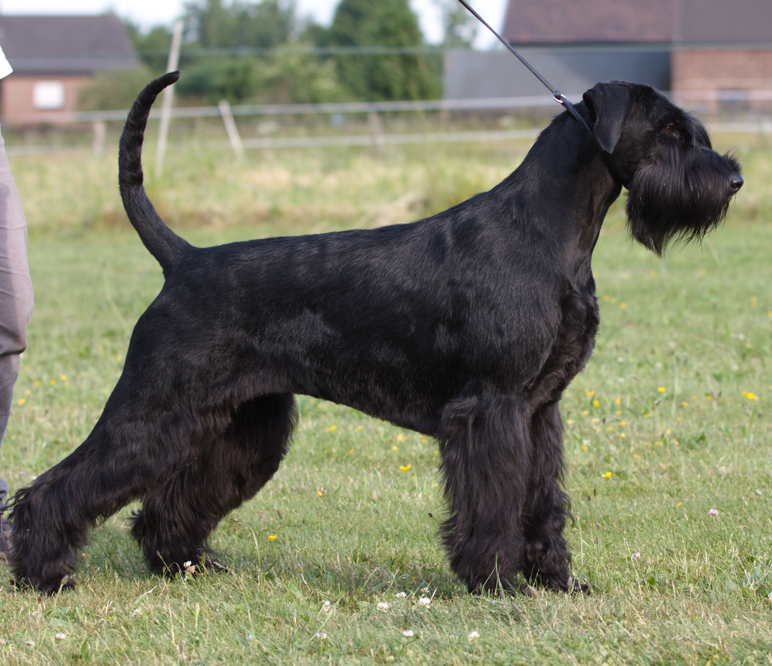Friedrich, hund - Wikipedia